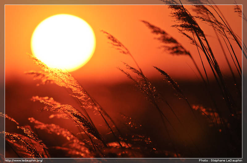 Balade camarguaise st phane ledauphin auteur photographe - Coucher de soleil marseille ...